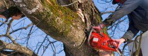 tree-removalA-9602